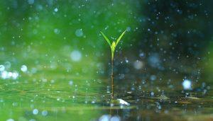 Rain is a lifeline